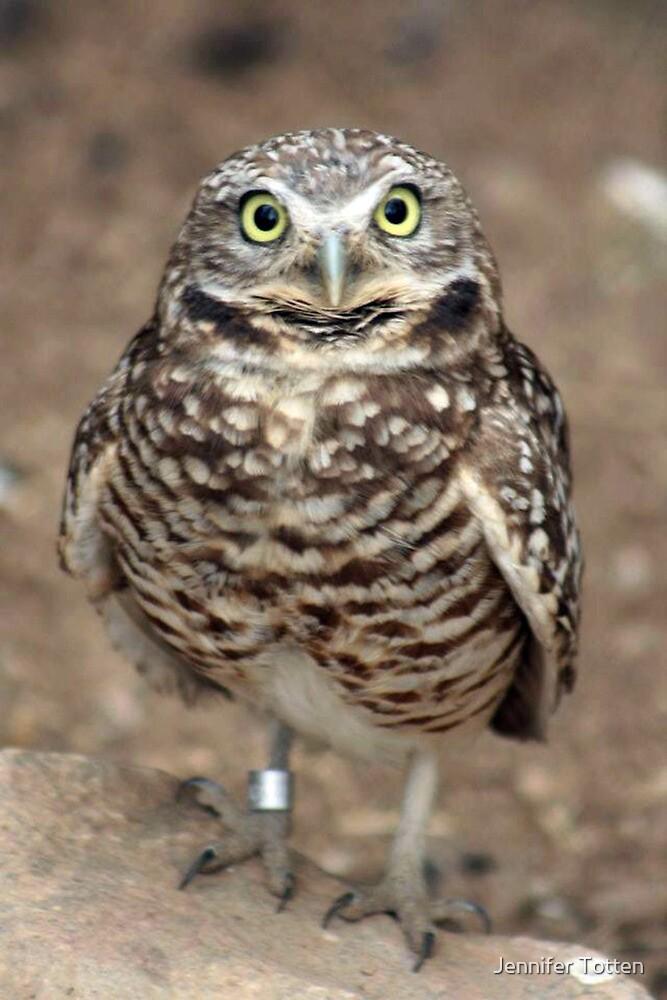 Pygmy Owl by Jennifer Totten