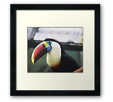Toucan - An oddly happy bird Framed Print