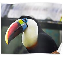Toucan - An oddly happy bird Poster