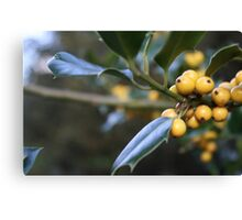 Yellow Holly Berries Canvas Print