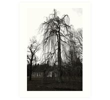 tree at deWint house Art Print