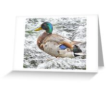 In the  Ducuzzi Greeting Card