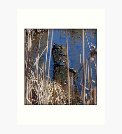 Ten Turtles Sunning Art Print