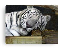 White Tiger Sleeping Canvas Print