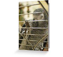 African Grey Greeting Card