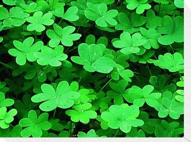 I'm Looking Over A Four-Leaf Clover by Bunny Clarke
