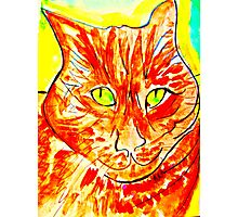 Green-Eyed Orange Tabby Photographic Print