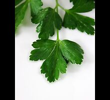 Petroselinum Crispum - Fresh Garden Parsley by © Sophie W. Smith