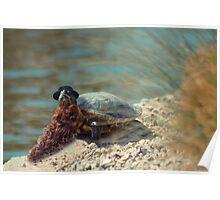 Rare Bearded Tortoise Poster