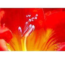 Exhilarate Photographic Print
