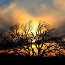 Sky Ablaze by Vince Scaglione