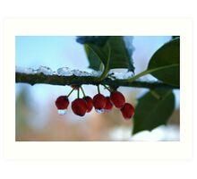 holly berries on ice Art Print