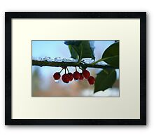holly berries on ice Framed Print