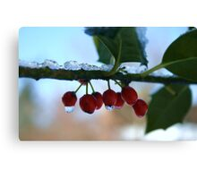 holly berries on ice Canvas Print