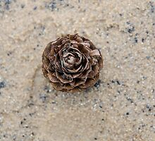 Pinecone on the beach by Sarah Horsman