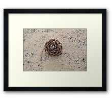 Pinecone on the beach Framed Print