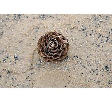 Pinecone on the beach Photographic Print