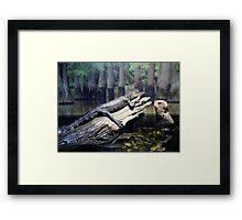 'Gator At Delta Rivers Framed Print