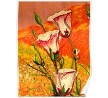 California Calochortus wildflower David Olson Poster
