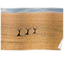 Mule Deer in Wheat Field Poster