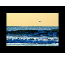 Seagull In Flight Over Atlantic Ocean Waves - Smith Point, New York Photographic Print