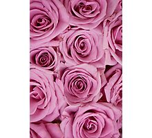 Southern Belle - pink roses Photographic Print
