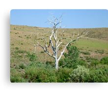 Tree at Steamboat Ditch Trail,Reno Nevada Canvas Print