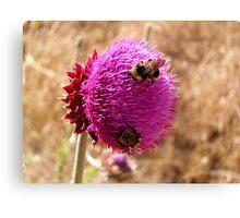 Pink Wildflower in the desert,Reno Nevada Canvas Print