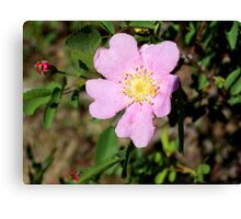 Pink wildflower at Steamboat Ditch Trail,Reno NV Canvas Print