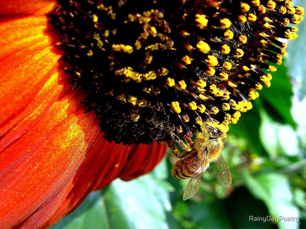 Bee on Sunflower by RainyDayPoetry