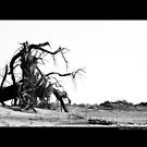 Uprooted Tree At The Beach - Smith Point Country Park, New York by © Sophie Smith