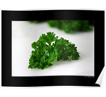 Petroselinum Crispum - Garden Parsley Leaf Poster