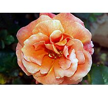 Tangerine rose Photographic Print