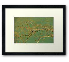 Spice Bush Framed Print