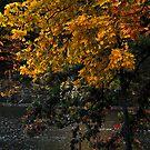 Murphysboro Lake (8) by michaelasamples
