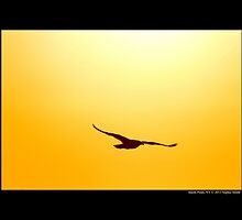 Seagull Flying Under The Sun - Smith Point, New York by © Sophie W. Smith