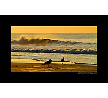 Seagulls By The Morning Sea - Smith Point, New York  Photographic Print