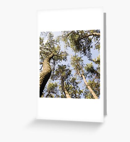 the rainbow forest Greeting Card