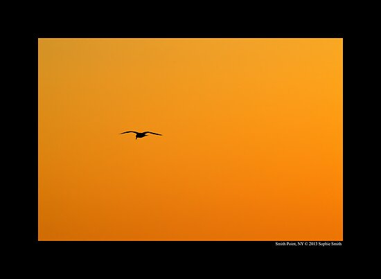 Seagull Flying Over Golden Sky - Smith Point, New York  by © Sophie W. Smith