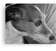 That is one spoiled dog..lol Metal Print
