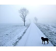 Winter Morning Walk Photographic Print