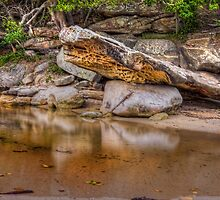 Reflections of nature by Chris Brunton