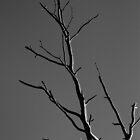 Tree by Dan Edwards