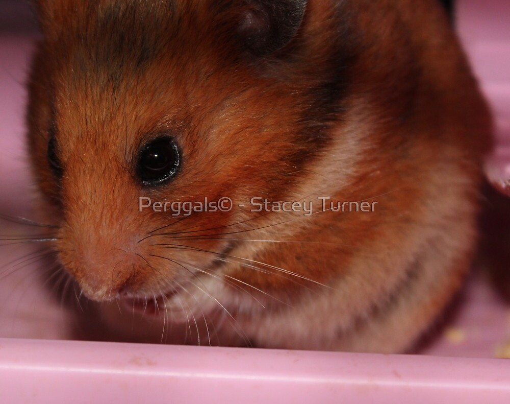Hammy by Perggals© - Stacey Turner