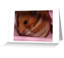 Hammy Greeting Card