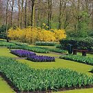 The Keukenhof  by Imagery