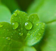 rain tears by Alessandra Antonini