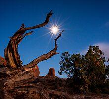 Moon Star by Armando Martinez