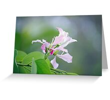 Delicate Delight Greeting Card
