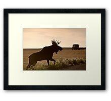 Prairie Moose Framed Print